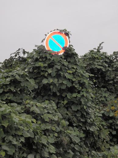 駐車禁止1.jpg